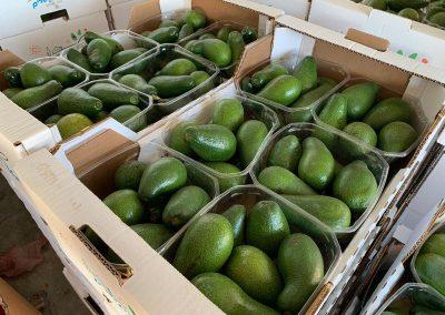 Avocado shipment
